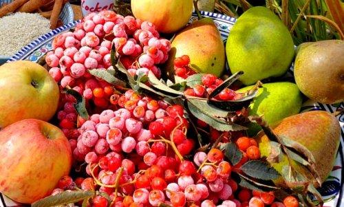 Native superfoods and edible wild plants - Part 1 - rowan, sloe, sea buckthorn and rosehip