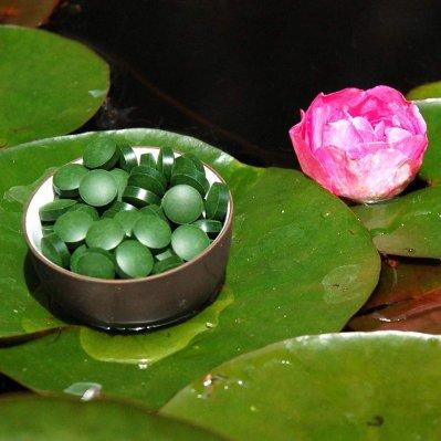 Chlorella pyrenoidosa Tabletten - Premiumqualität