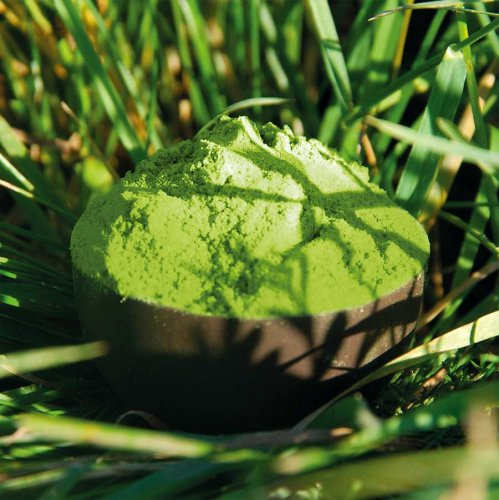 Barley Grass powder - Premium quality