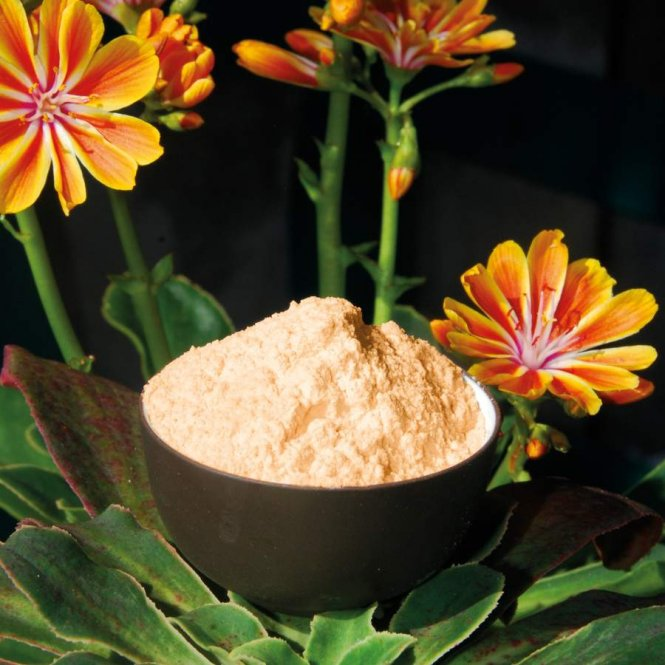 Acerola powder with 17% natural vitamin C.