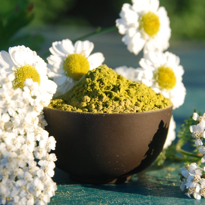 Moringa oleifera Pulver - 100% reine Premiumqualität