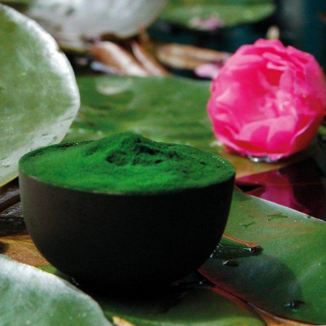 Spirulina platensis poeder - premium kwaliteit