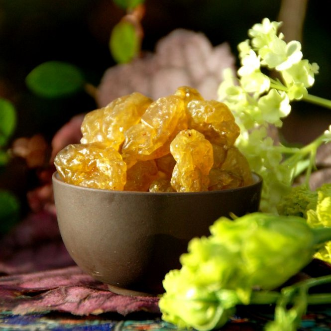 Gooseberries - candied directly after picking