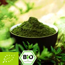 Bio Moringa oleifera Pulver - 100% rein
