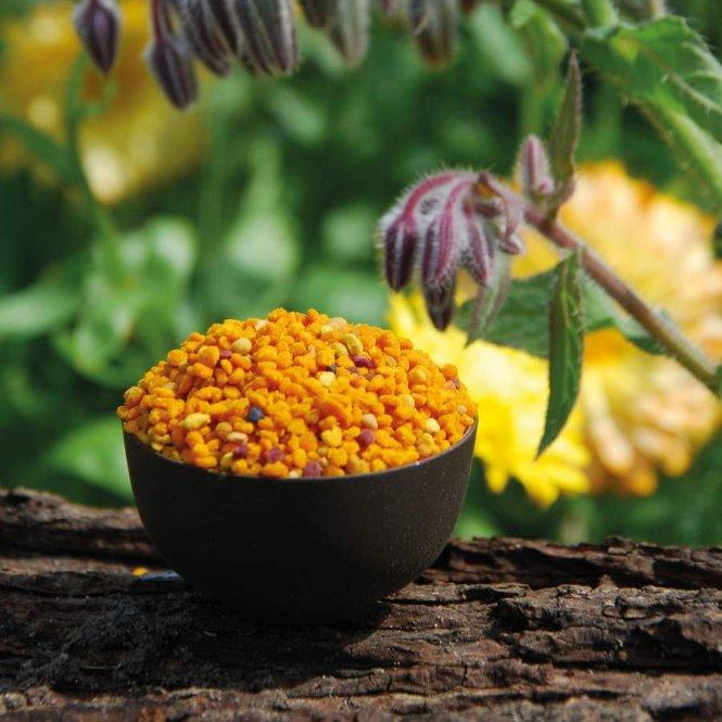 Blütenpollen aus Ungarn - 1A Imkerqualität 1kg